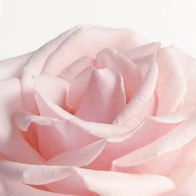 octobre rose, article blog Jeanne Voilier, créatrice tops et robes en soie, bijoux en or et pierres précieuses
